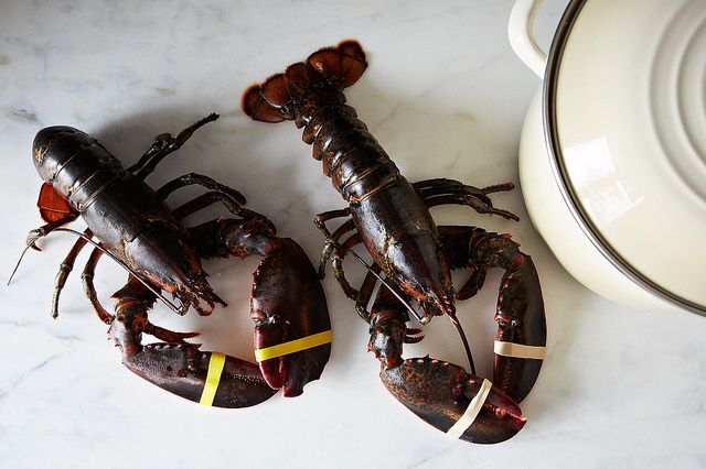How to Cook a Lobster from Food52