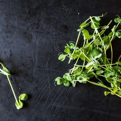 Pea Shoots: The Taste of Spring