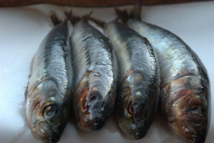 Sardines en Escabeche with Fresh Tarragon