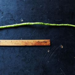 The Long and the Short of Yard-Long Beans