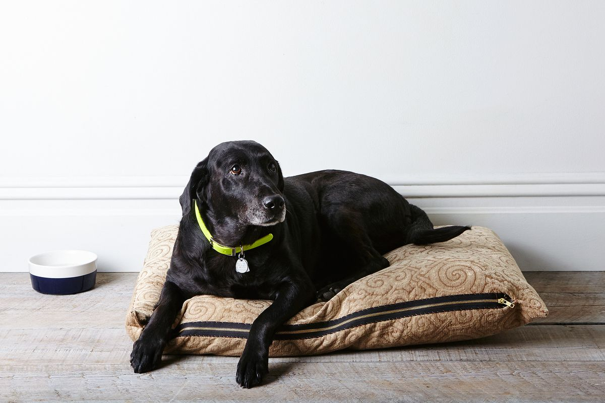 How to make a dog bed even if you barely know how to sew for Build a dog bed