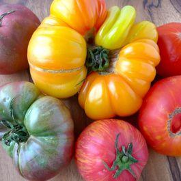 Tomatoes by Ellen Bedingfield