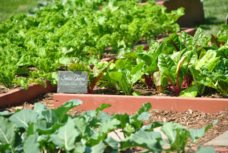 What will happen to the White House Kitchen Garden?