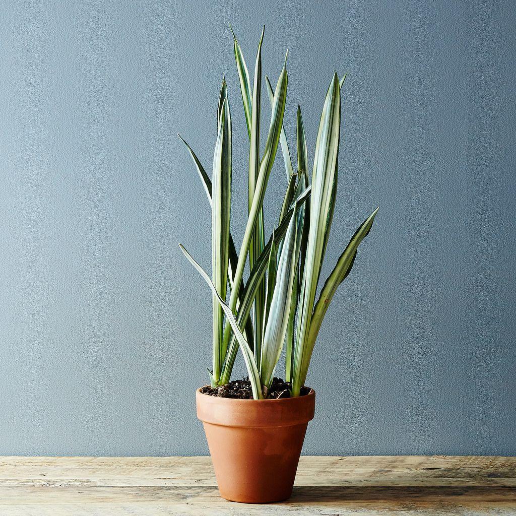 5 no kill house plants for any home