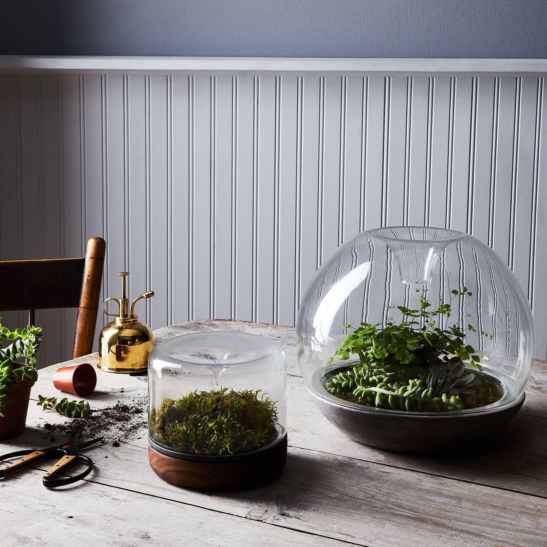Moss Terrarium On Food52