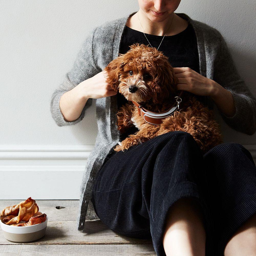 Pig Ear Dog Treats Recipe