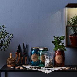 How to Keep Your Green Thumb Shining, Sun or No Sun