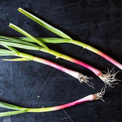 Green Garlic: The Adolescent Allium
