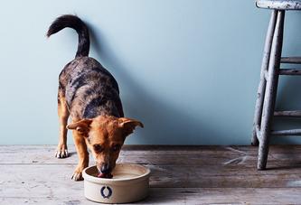 Wait, I Should Be Washing My Pet's Bowl *How Often*?
