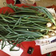 1994e583 dad5 4445 a1a3 491ff5844f3b  87588 vegetarian preferably vegan recipes with green onion