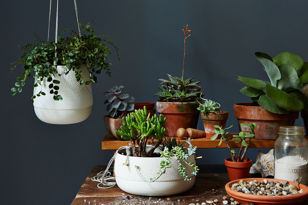 Pigeon Toe Hanging Planters