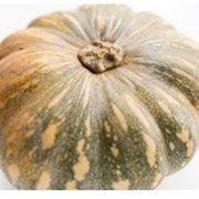 8c253a84 795b 42a4 b5cf db7ec7798c52  pumpkin