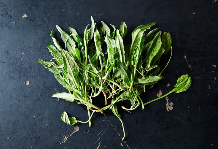 Sorrel and How to Use It