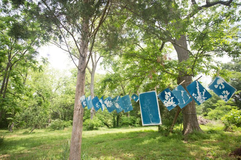 hang cyanotype to dry
