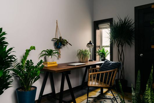 These 8 Plants Will Survive in *Any* Office Environment