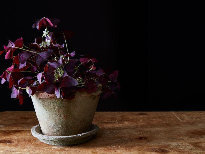 8 Edible Flowers to Brighten Your Garden—& Dinners