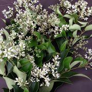 Dc65692b 7350 4557 bc1a 228d219c0595  elder flower