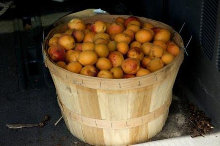 Vanilla scented sour apricot preserves