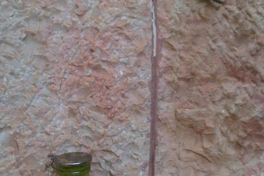 Leek and garlic scape pesto