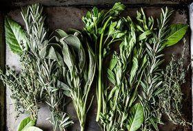 B256f2f1 a578 45f3 aa7f 228fb445dbd0  fresh herbs