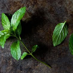 Louisa Shafia's 5 Essential Persian Ingredients