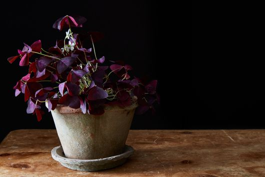 How *Not* to Kill Your Plants This Winter