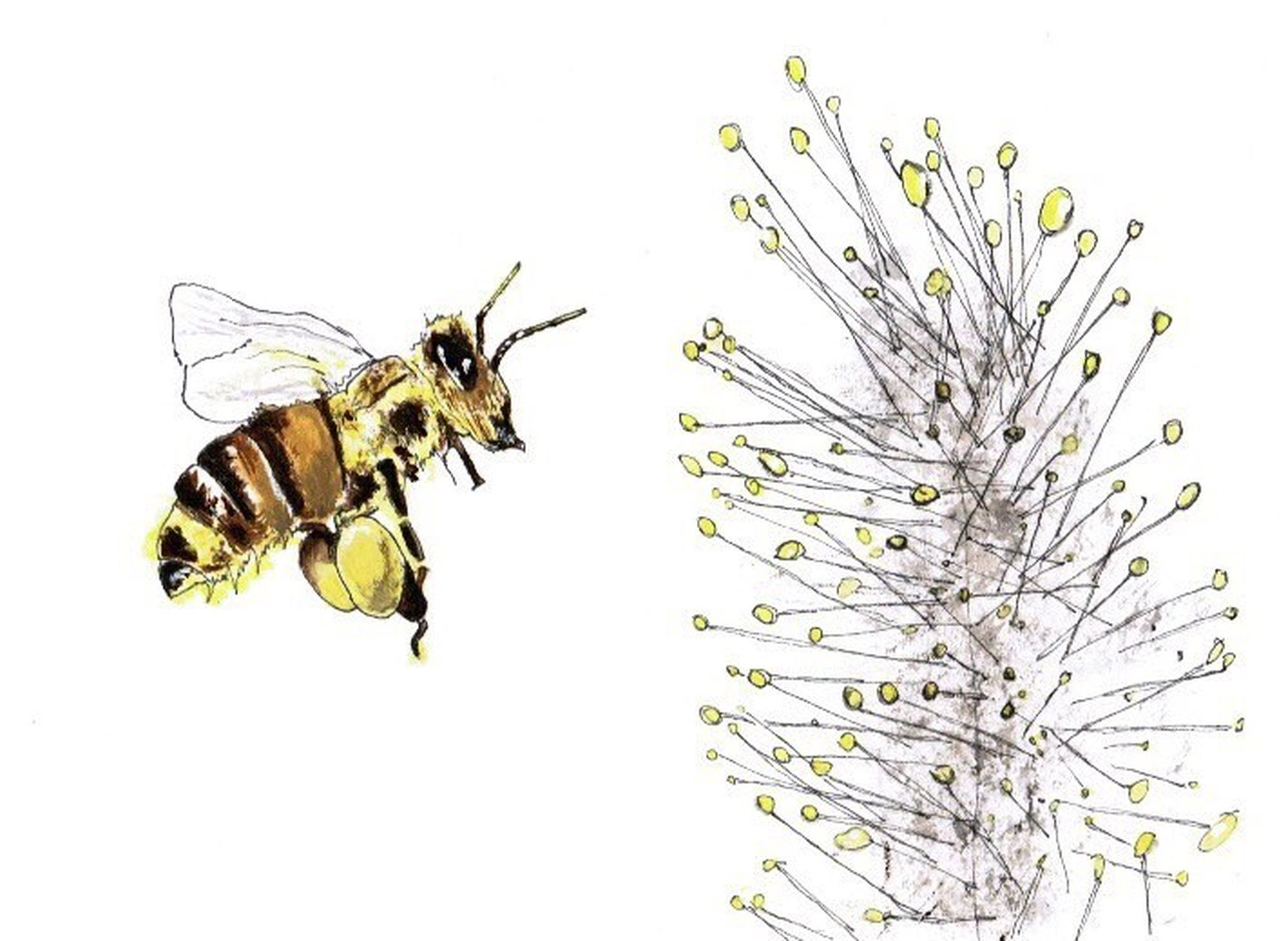 Does Bee Pollen Deserve Its Miracle Food Buzz?