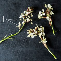 Arugula Flowers: Your Salad Just Got Better Looking