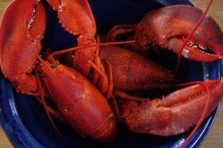 A5f48d09 bd8c 4420 ae50 b04c03ec2afd  lobster part2