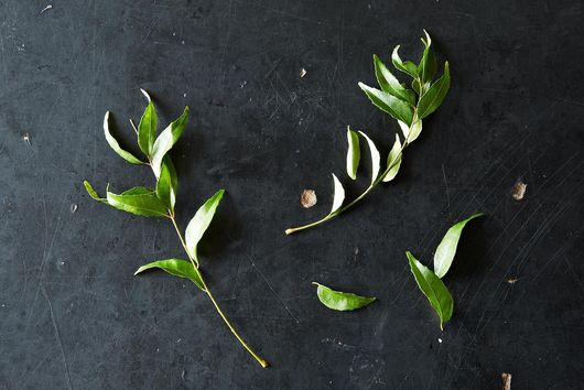 Everything You Need to Know About Curry Leaves