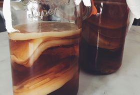 Look at What Our SCOBY Has Become!