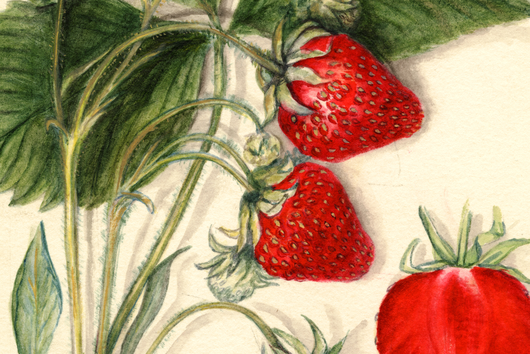 The Soothing, Spellbinding Beauty of Vintage Fruit Watercolors