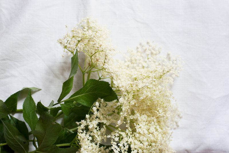 Elderflowers.