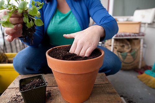 a start into pot