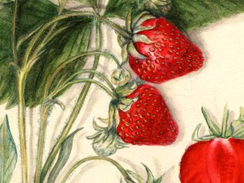 The Soothing, Spellbinding Beauty of Vintage Fruit Watercolors