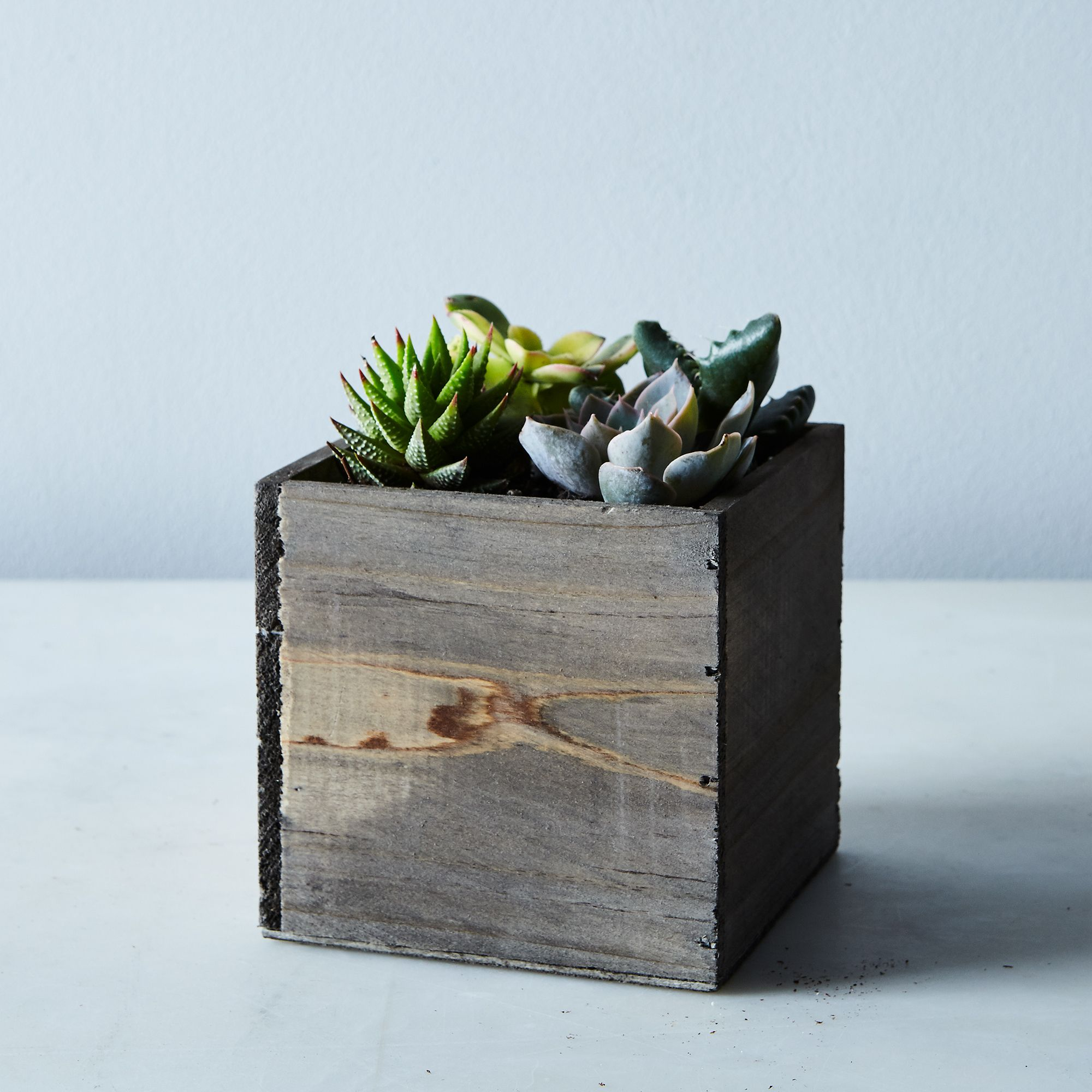 56775efd 2e71 428a 8a84 c80742bccbb0  2017 0302 shop succulents urban living wood box succulents silo rocky luten 009