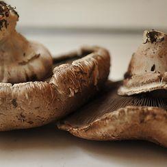 Will's Mushrooms
