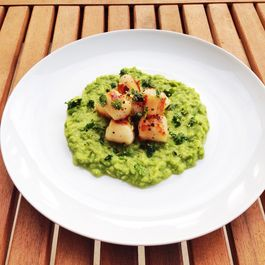 Seared Scallops with Sweet Pea Puree