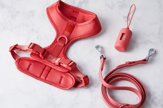 Ultimate Dog Walker's Kit, Collars and Leashes
