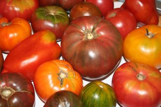 420709a7 a238 491f 9517 f00841529309  heirloom tomatoes