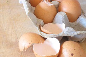 8b242c28 46cc 48a1 aa23 ce401056d2c2  eggs