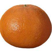 5dbf5a8e 9450 4b5c 8eaa 59fd4c6ddf9f  grapefruitl1507 468x413
