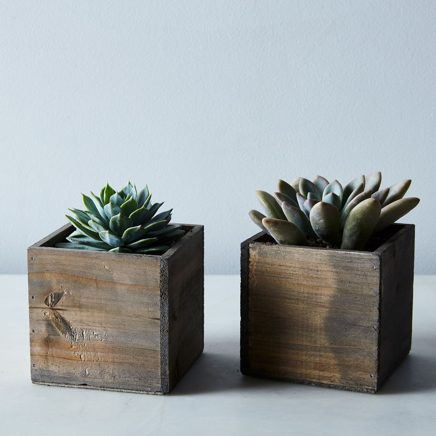 DIY Succulent And Wood Planter (Set Of 2) On Food52
