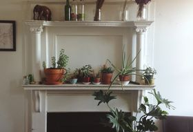 The Best Starter Houseplants & How to Care for Them