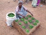 06cc2361 c41f 4d4b aeba f1257c75741b  cayenne chili peppers