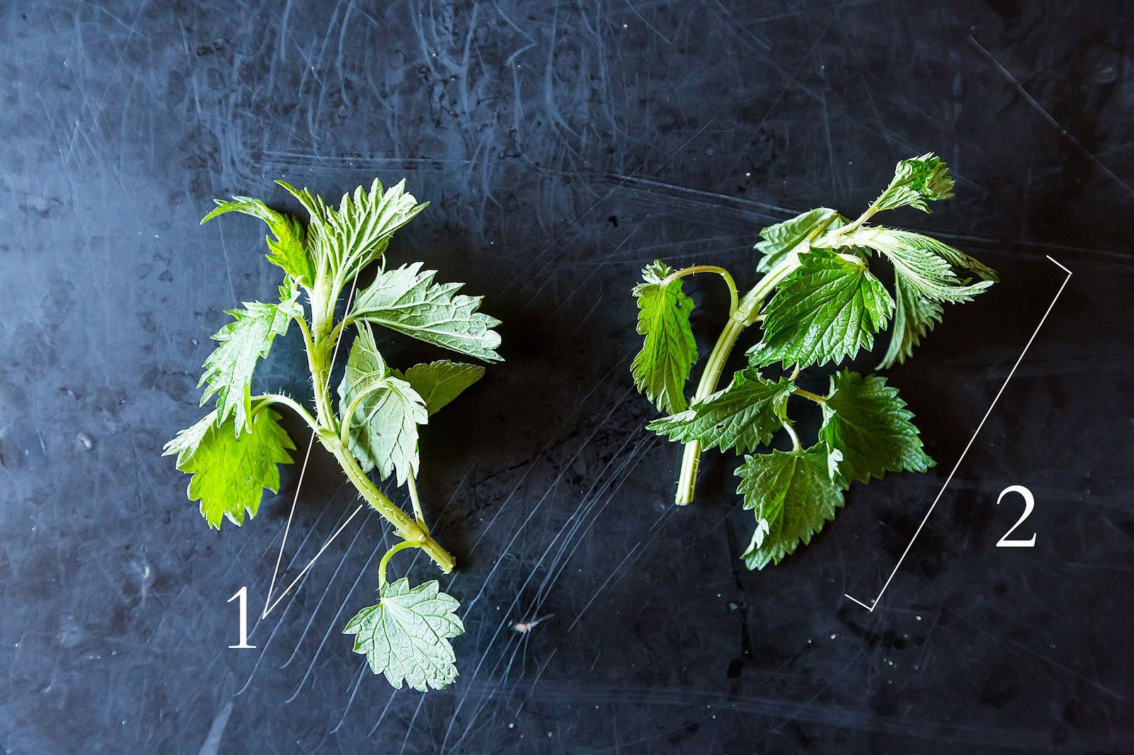 Stinging Nettles and How to Eat Them, from Food52