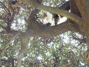Bc08a20d 2700 4c1a af3b 13e4325d88af  cat on tree 2