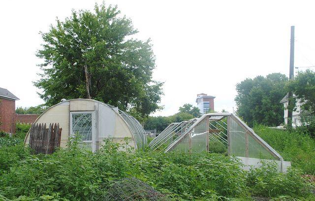 hoop houses
