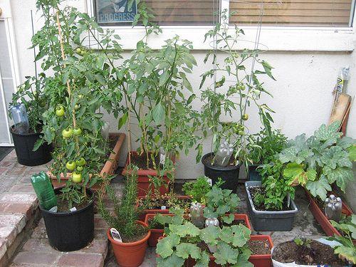 Reeve's Garden
