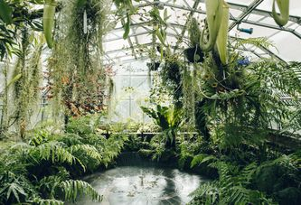 A Plant-Lover's Guide to the 5 Best Public Greenhouses in the UK